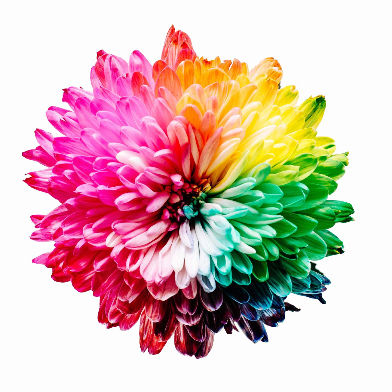 Tendenze colori 2020